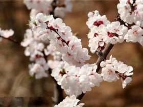 春天开的花有哪些,春天赏花就看这8种