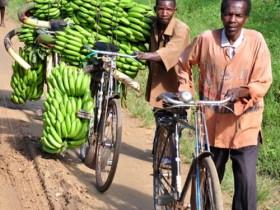 乌干达是哪个国家