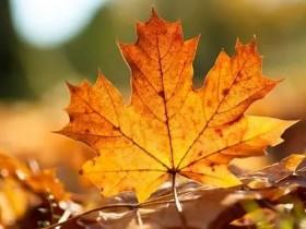 秋天的景色作文300字