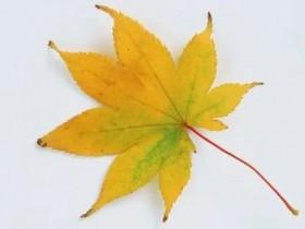 描写秋天树叶的作文600字